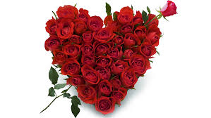 valentine day heart of 50 Red roses