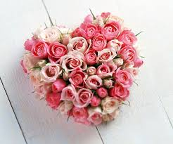 50 pink roses heart