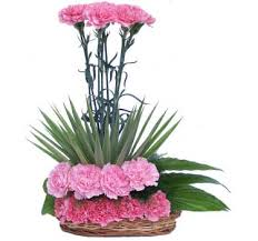 50 carnations arrangement