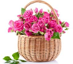 40 pink roses in a basket