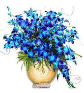 Blue exotic and graceful orchids in a vase