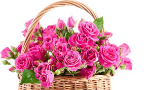 20 pink roses in a basket