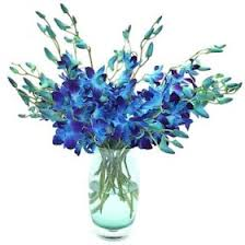 Blue Orchids in a vase