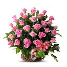100 pink roses in a basket