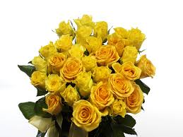 36 Yellow roses in a bouquet