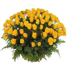 100 yellow roses in a basket